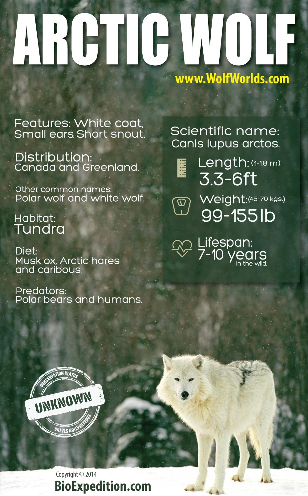 1000 images about wolves on pinterest white wolves arctic wolf and - Arctic Wolf Habitat For Pinterest