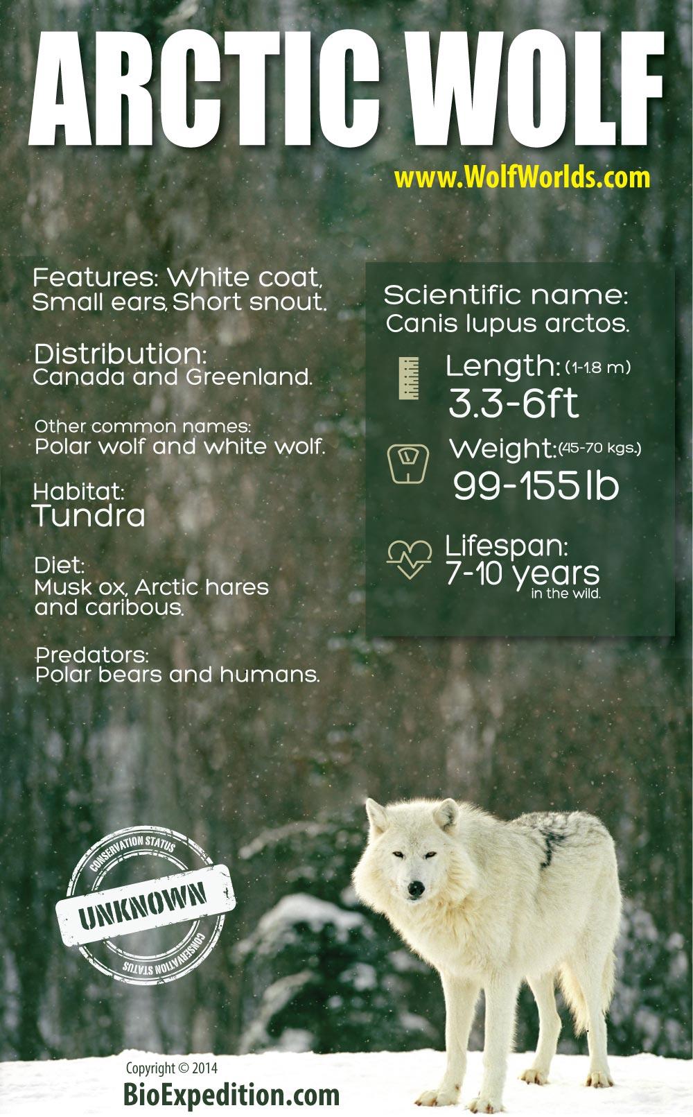 arctic-wolf 1000